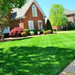Rasenmäher - ein kurzer Blick in ihre Geschichte
