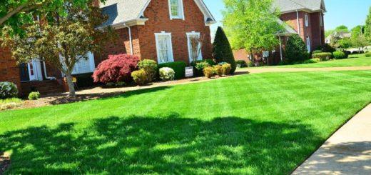 gepflegter Rasen