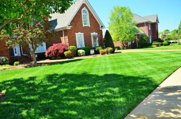 gepflegter Rasen gelingt nur mit einem guten Rasenmäher