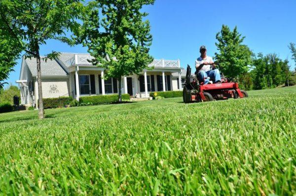 Rasenmäher-Kauf: Das sollte man beachten beim Rasenmäher kaufen