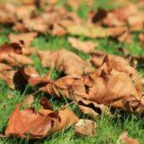 Laub auf Rasen