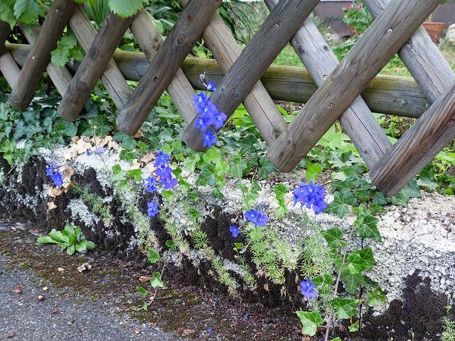 Gartenzaun und Gartentor benötigen Pflege