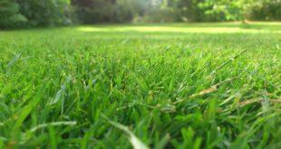 Rasen Pflege mit Vertikutierer