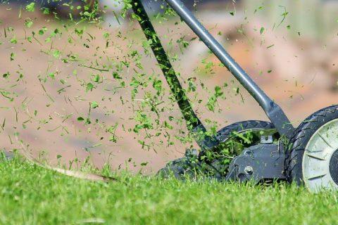 Wie kann man seinen Rasen am besten pflegen?