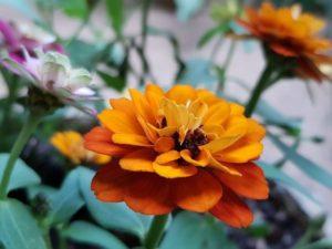 Attraktivität der Pflanzen im Garten