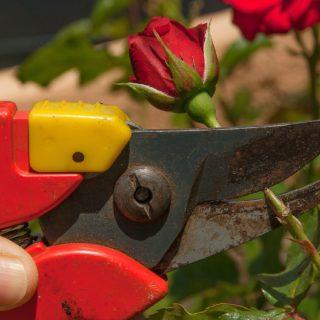 Gartenschere kaufen - Fragen und Antworten vor dem Kauf