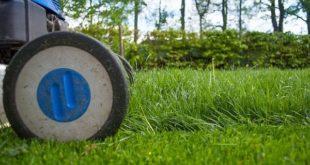 4 Tipps zur Rasenpflege