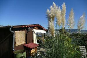 Regentonne kaufen für Gartenhaus