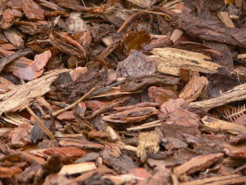 Rindenmulch im Garten Vorteile und Nachteile