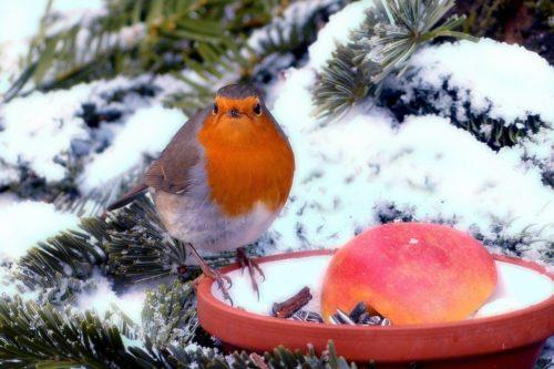 Futterstellen für Vögel im winterlichen Garten einrichten