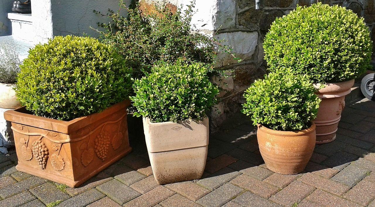 Pflanzkübel und Pflanztöpfe z.B. mit Buchsbaum